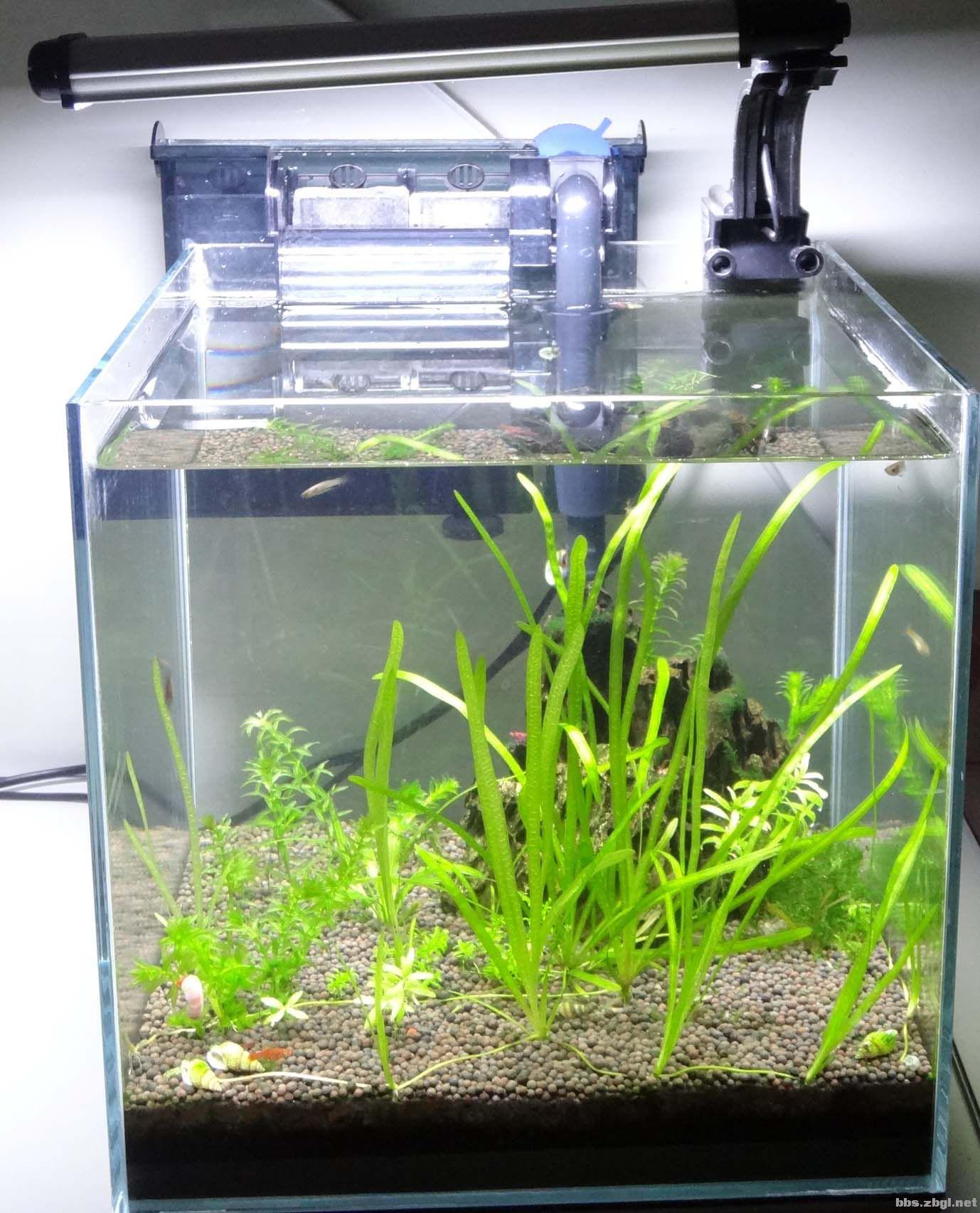 造景石 小型生态鱼缸及热带鱼
