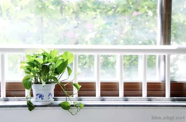 新房刚装修好,想净化室内空气,多种绿植有用吗?-2.jpg