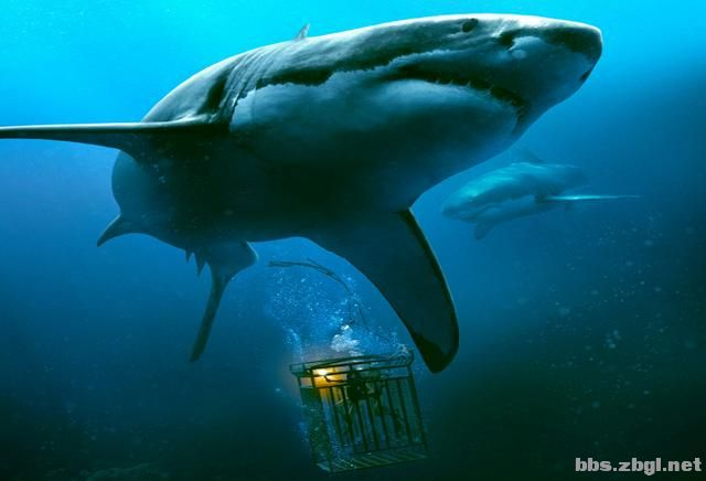 10部深海惊悚片,一口气刷完紧张到窒息-2.jpg